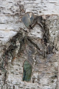 Grand-Miroir-Labradorites-6-200x300