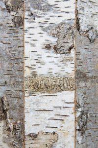 coffre-amethyste-detail2