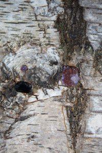 coffre-amethyste-detail3