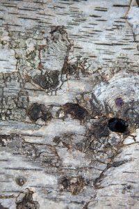 coffre-amethyste-detail4