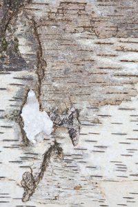 coffre-amethyste-detail5