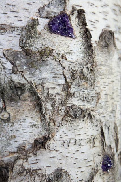 Semainier Lucerne, marqueterie, bouleau, birch bark furniture, 2016