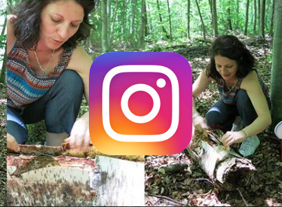 instagram birch bark